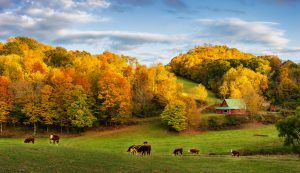 cattle farm va loan, va agricultural lending, farm loans, farming operations